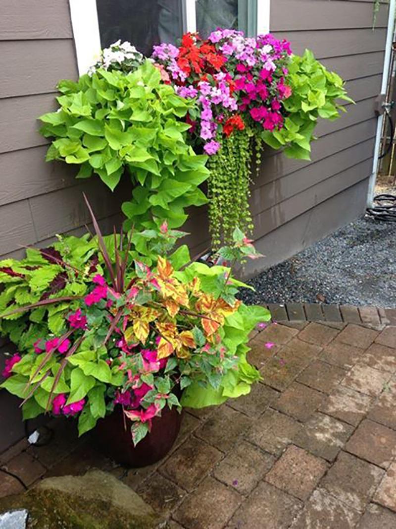 цветы на подоконнике летом