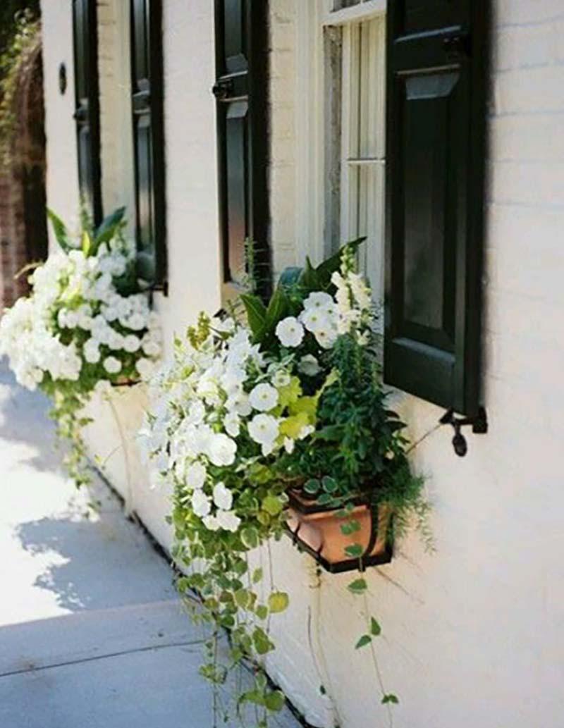 как выращивать цветы на подоконнике