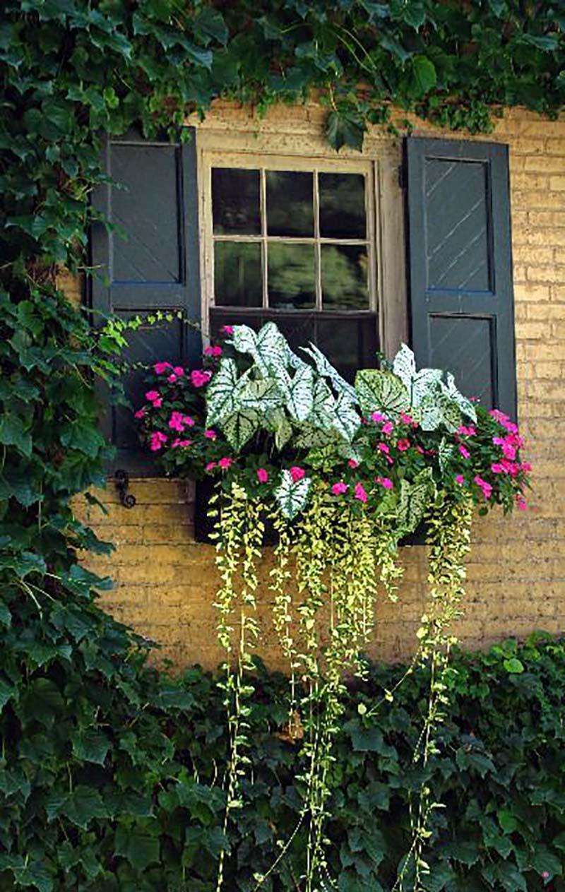 как обустроить цветник за окном