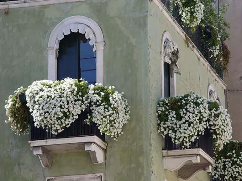 цветы на узком подоконнике