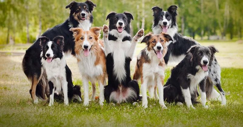 рейтинг собак для семьи
