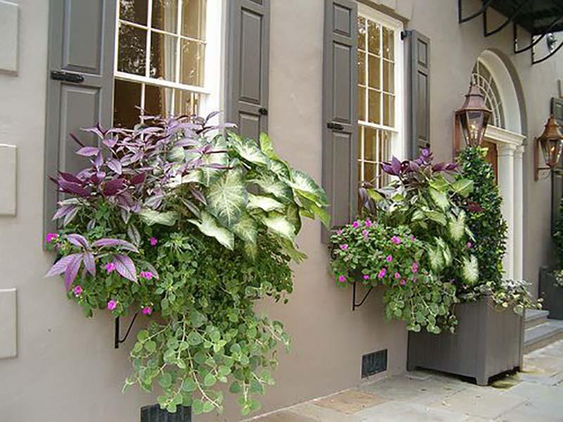 комнатные растения цветы на подоконнике