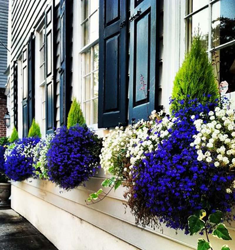 уличные цветы на подоконнике