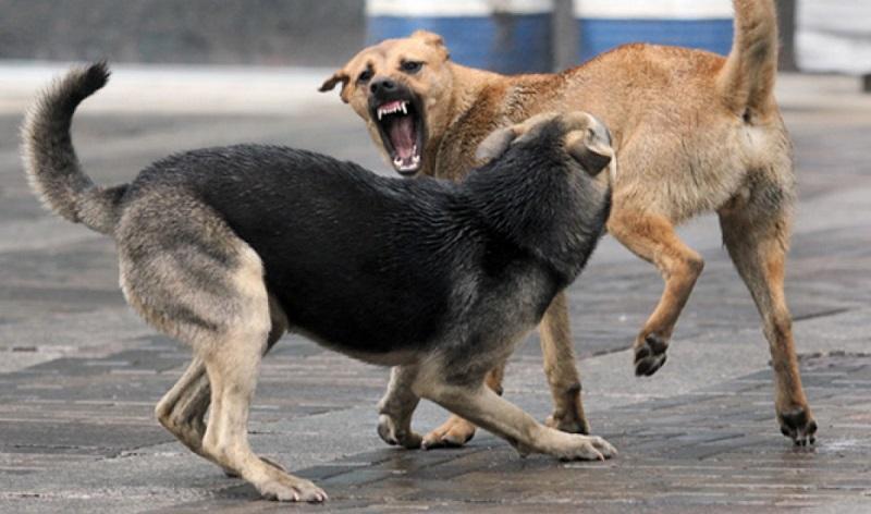 как вести себя если напала собака