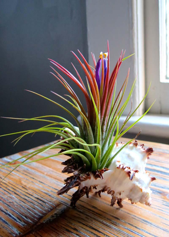 растения в раковинах