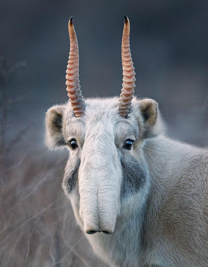 Animale pe cale de dispariție. Păcat că deja nu le vom mai putea vedea in realitate 1