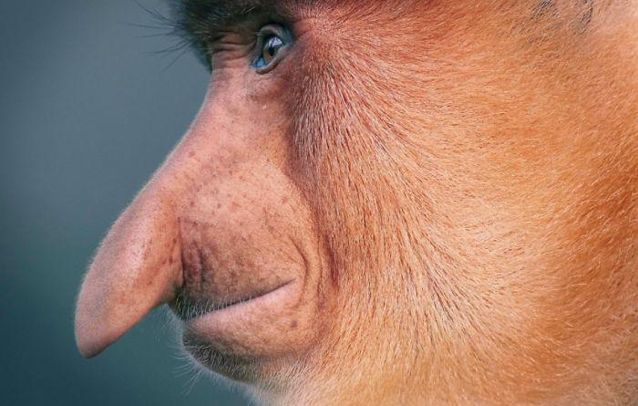 Animale pe cale de dispariție. Păcat că deja nu le vom mai putea vedea in realitate 8