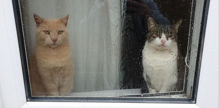 Pisici de intalniri